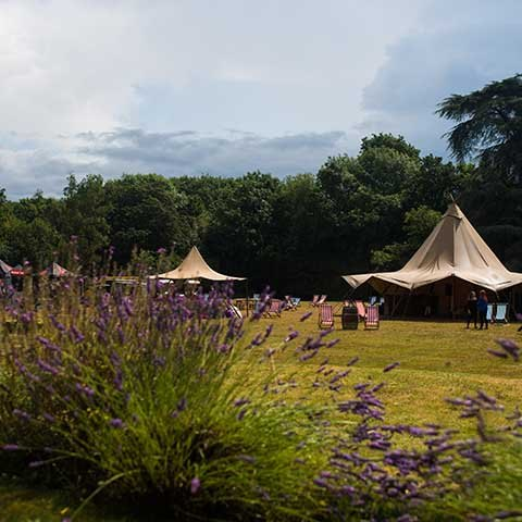 Welcome to Wedstock!